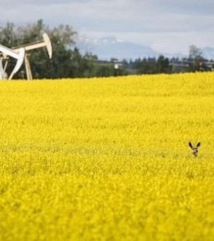 Canadian farmers have spring in their step from strongest commodity prices in years.